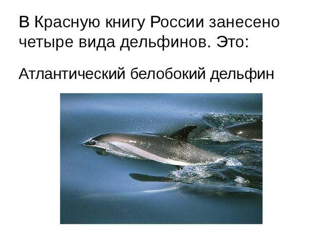В Красную книгу России занесено четыре вида дельфинов. Это: Атлантический бел...