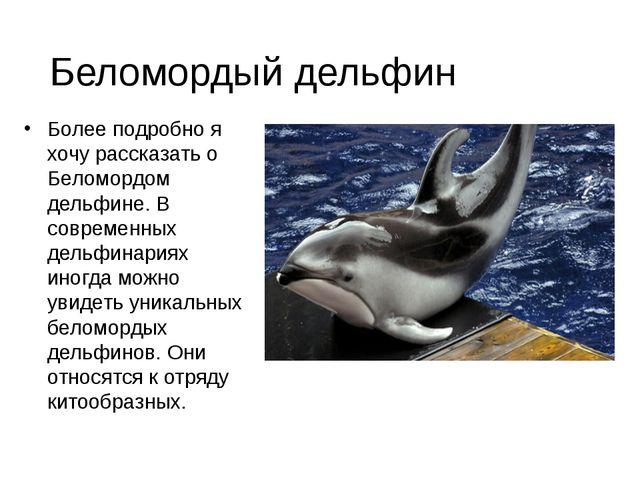 Более подробно я хочу рассказать о Беломордом дельфине. В современных дельфи...
