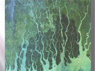 13. Дельта какой великой реки Индии изображена на снимке?