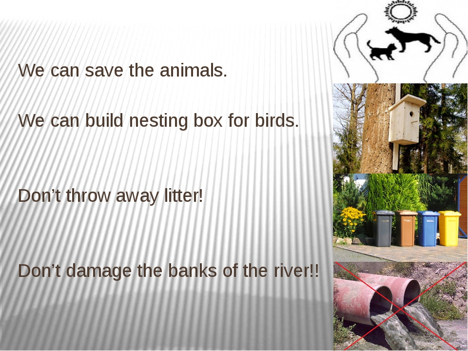 We can save the animals. We can build nesting box for birds. Don't throw awa...
