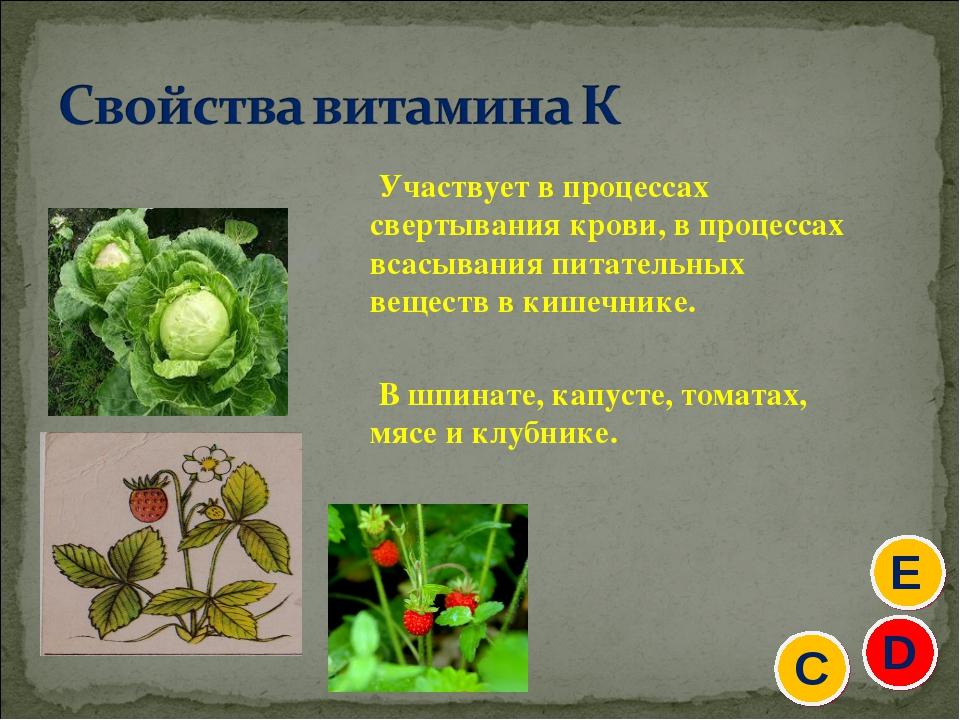 Участвует в процессах свертывания крови, в процессах всасывания питательных в...