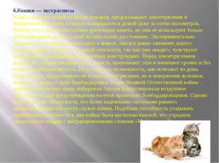 6.Кошки — экстрасенсы Кошки спасают людей во время пожаров, предсказывают зе
