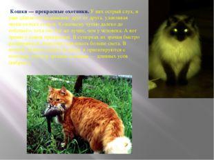 Кошки — прекрасные охотники. У них острый слух, и уши двигаются независимо д