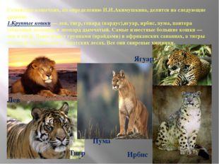 Семейство кошачьих, по определению И.И.Акимушкина, делится на следующие групп