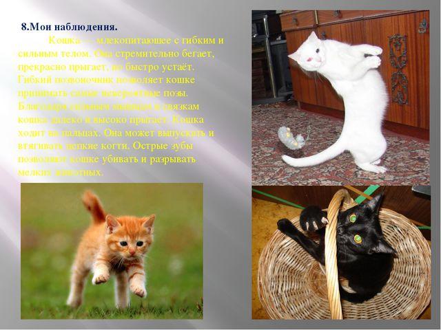 8.Мои наблюдения. Кошка — млекопитаюшее с гибким и сильным телом. Она стреми...