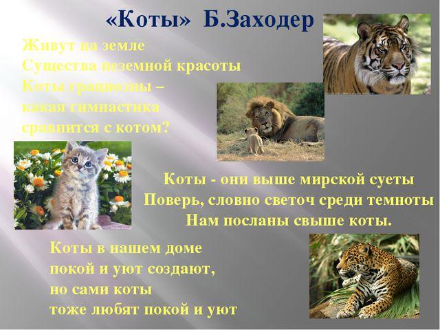 Живут на земле Существа неземной красоты Коты грациозны – какая гимнастика ср...