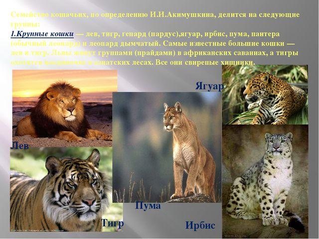 Семейство кошачьих, по определению И.И.Акимушкина, делится на следующие групп...
