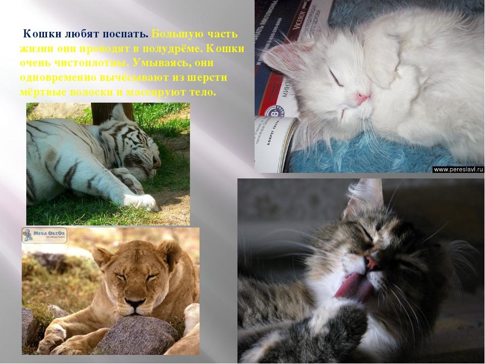 Кошки любят поспать. Большую часть жизни они проводят в полудрёме. Кошки оче...