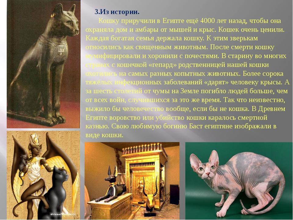 3.Из истории. Кошку приручили в Египте ещё 4000 лет назад, чтобы она охранял...