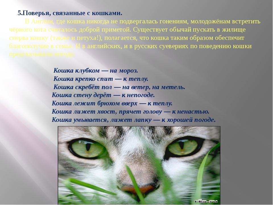 5.Поверья, связанные с кошками. В Англии, где кошка никогда не подвергалась...