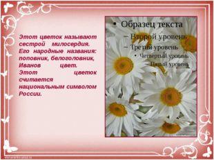 Этот цветок называют сестрой милосердия. Его народные названия: поповник, бел