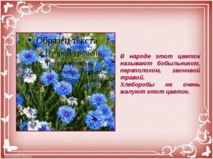В народе этот цветок называют бобыльником, переполохом, звоновой травой. Хлеб