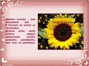 Цветок солнца – так называют его. В Россию он попал из Голландии. Долгие годы