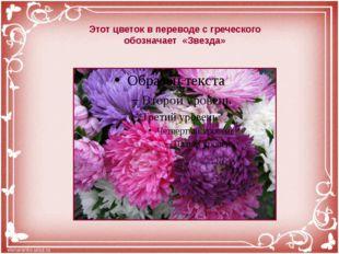 Этот цветок в переводе с греческого обозначает «Звезда»
