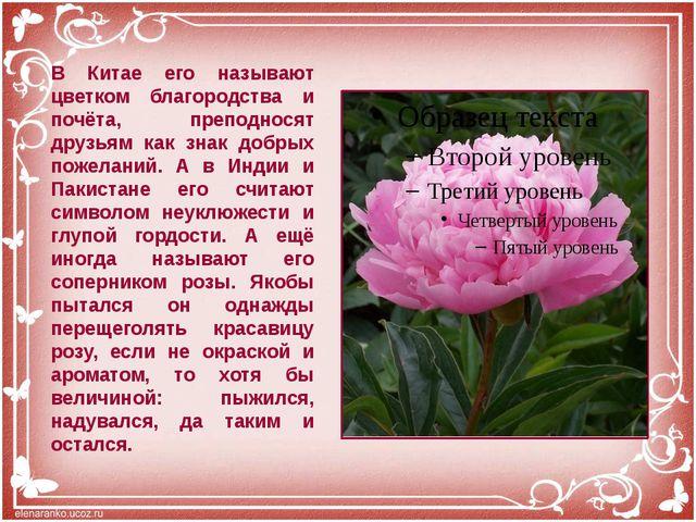 В Китае его называют цветком благородства и почёта, преподносят друзьям как з...