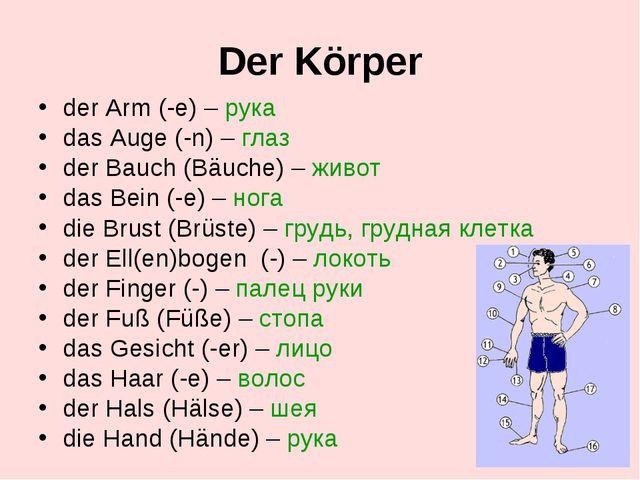 Der Körper der Arm (-e) – рука das Auge (-n) – глаз der Bauch (Bäuche) – живо...