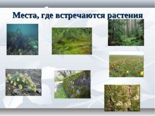 Места, где встречаются растения