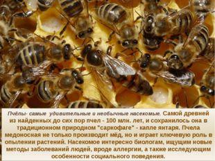 Пчёлы- самые удивительные и необычные насекомые. Самой древней из найденных д