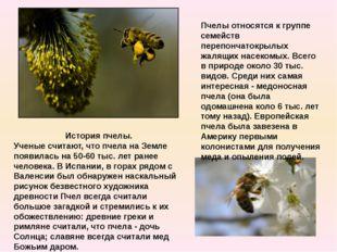 История пчелы. Ученые считают, что пчела на Земле появилась на 50-60 тыс. лет