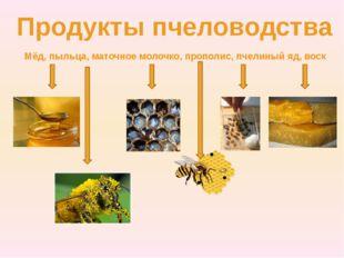 Продукты пчеловодства Мёд, пыльца, маточное молочко, прополис, пчелиный яд, в