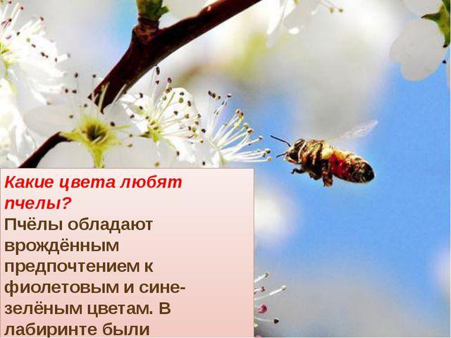 Какие цвета любят пчелы? Пчёлы обладают врождённым предпочтением к фиолетовым...