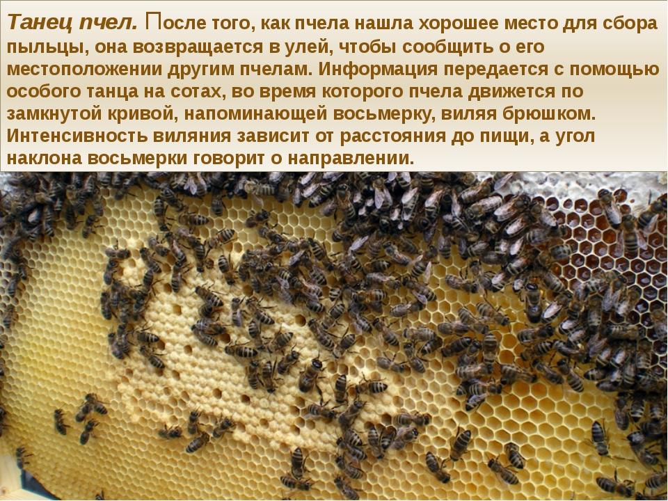 Танец пчел. После того, как пчела нашла хорошее место для сбора пыльцы, она в...