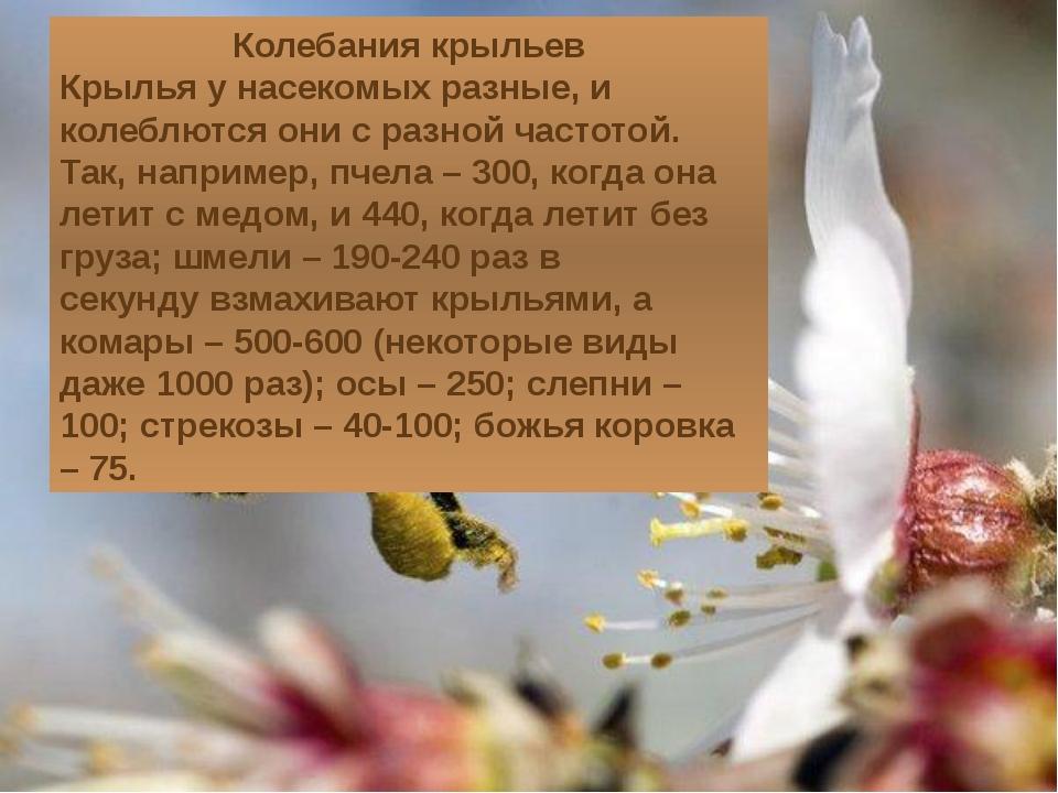 Колебания крыльев Крылья у насекомых разные, и колеблются они с разной частот...
