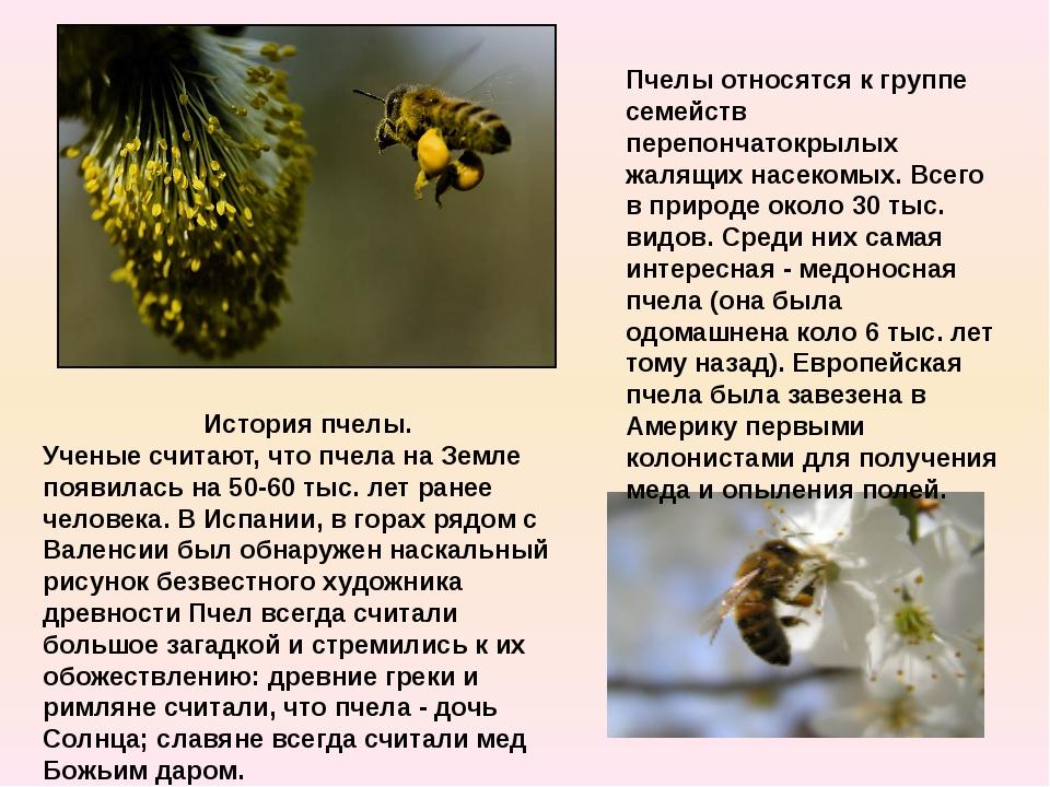 История пчелы. Ученые считают, что пчела на Земле появилась на 50-60 тыс. лет...