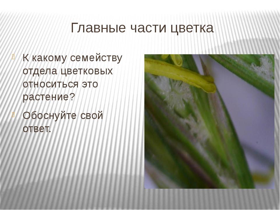 Главные части цветка К какому семейству отдела цветковых относиться это расте...