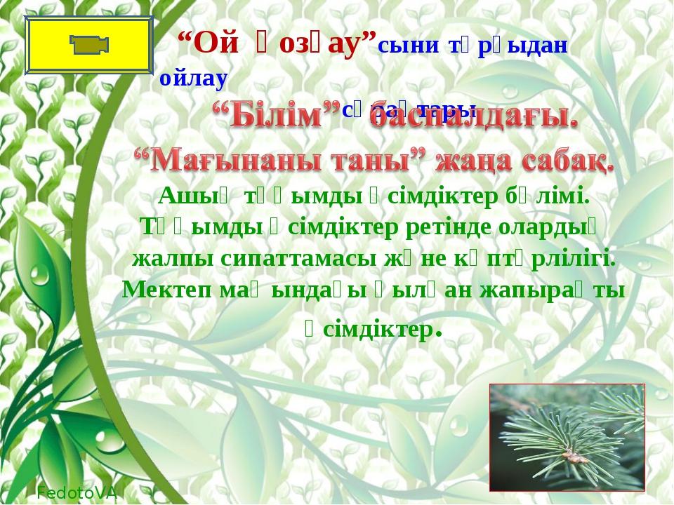 Ашық тұқымды өсімдіктер бөлімі. Тұқымды өсімдіктер ретінде олардың жалпы сипа...