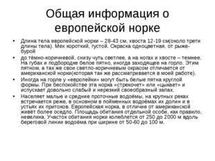 Общая информация о европейской норке Длина тела европейской норки – 28-43 см,