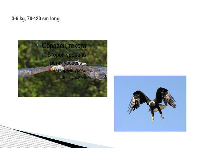 3-6 kg, 70-120 sm long