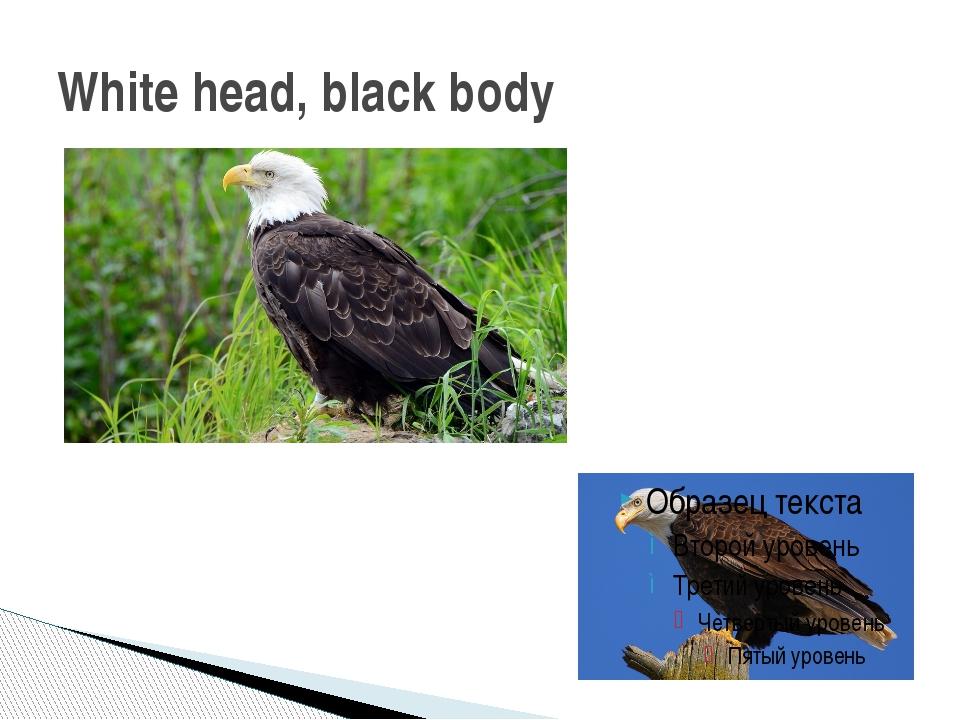 White head, black body