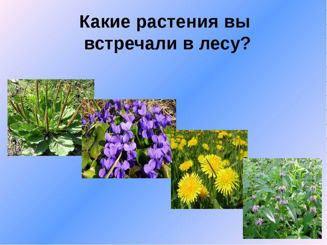Какие растения вы встречали в лесу?