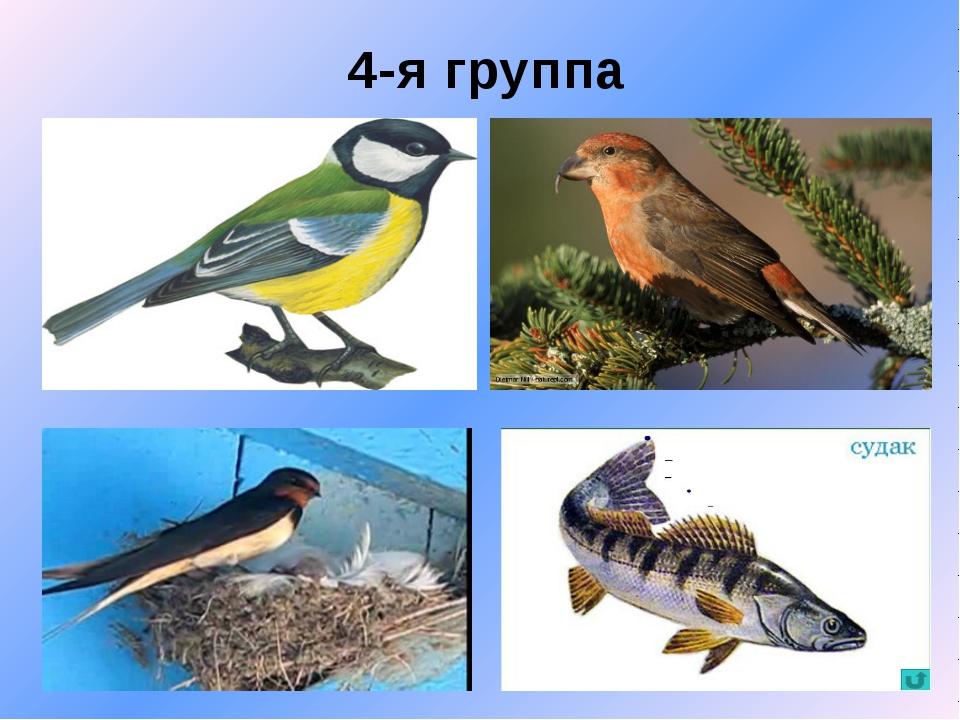 4-я группа