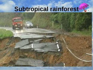 Subtropical rainforest