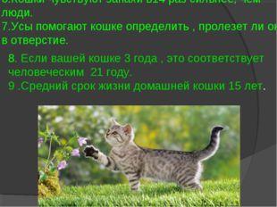 6.Кошки чувствуют запахи в14 раз сильнее, чем люди. 7.Усы помогают кошке опре