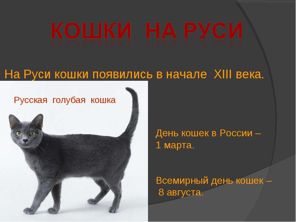 День кошек в России – 1 марта. Всемирный день кошек – 8 августа. Русская голу...