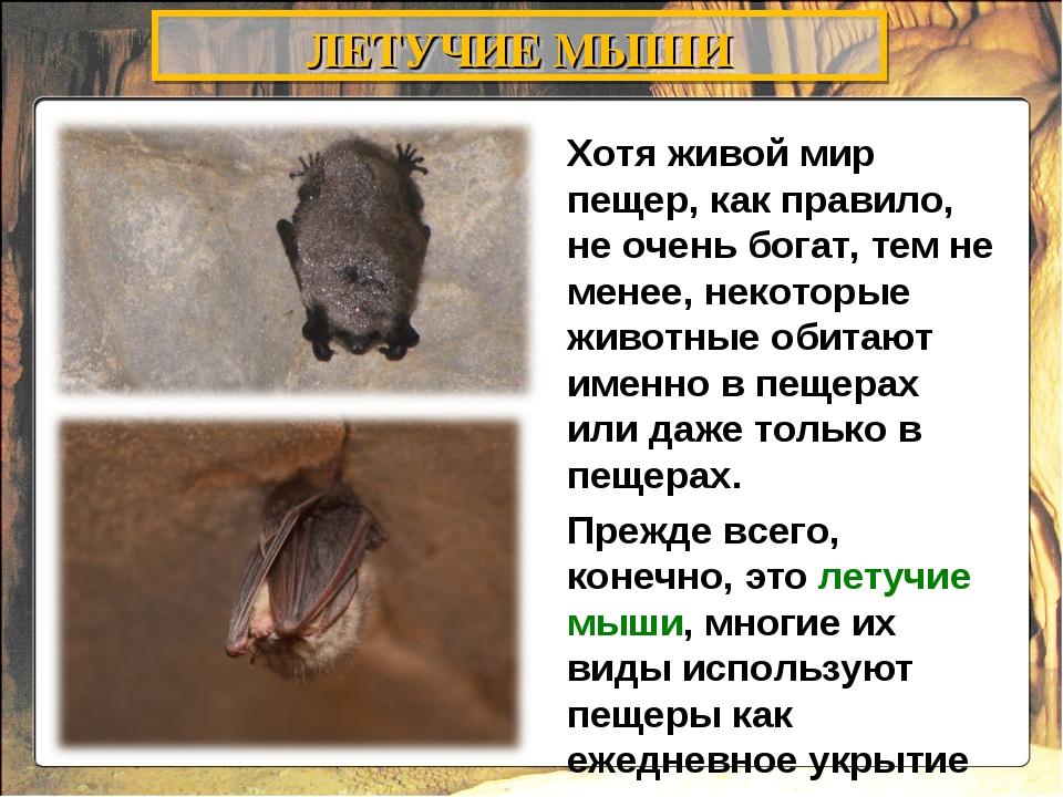 Хотя живой мир пещер, как правило, не очень богат, тем не менее, некоторые жи...