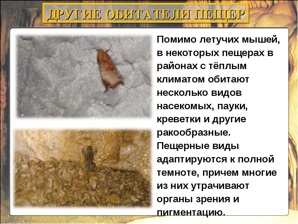 Помимо летучих мышей, в некоторых пещерах в районах с тёплым климатом обитают...