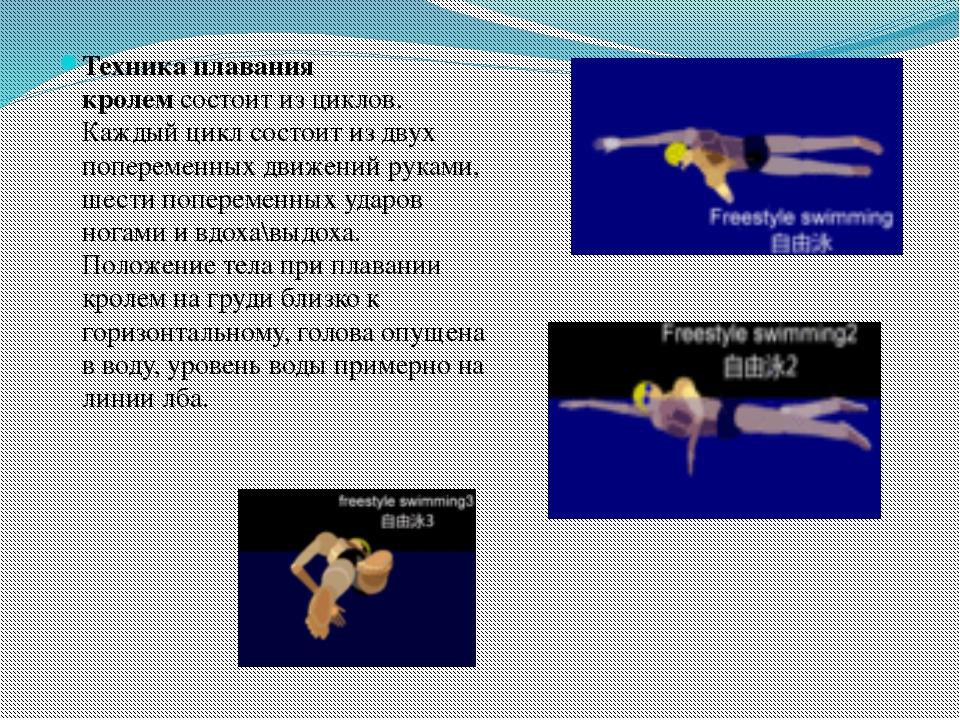 Техника плавания кролемсостоит из циклов. Каждый цикл состоит из двух попере...