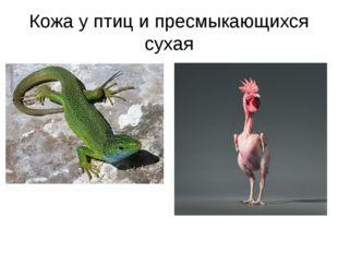 Кожа у птиц и пресмыкающихся сухая