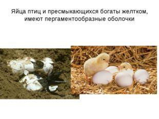 Яйца птиц и пресмыкающихся богаты желтком, имеют пергаментообразные оболочки