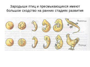 Зародыши птиц и пресмыкающихся имеют большое сходство на ранних стадиях разви