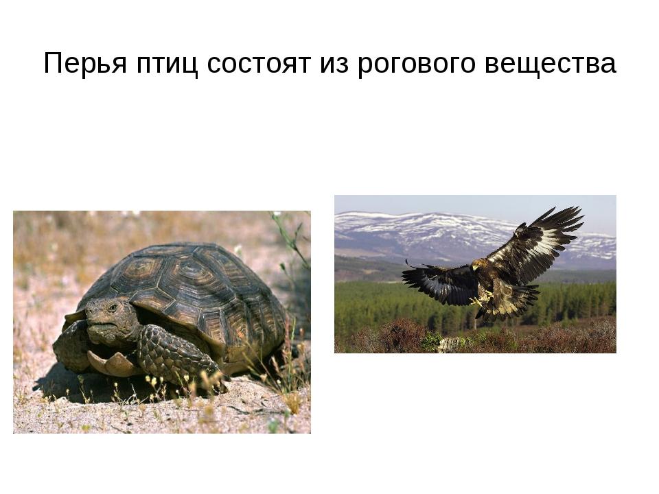 Перья птиц состоят из рогового вещества