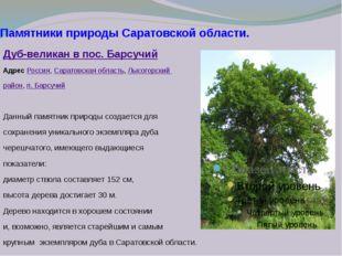 Памятники природы Саратовской области. Дуб-великан в пос. Барсучий Адрес Росс