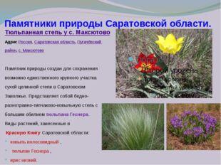 Памятники природы Саратовской области. Тюльпанная степь у с. Максютово Адрес