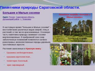 Памятники природы Саратовской области. Большие и Малые сосняки Адрес Россия,