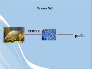 ЧЕШУЯ рыба Эталон №3