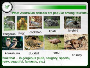What Australian animals are popular among tourists? kangaroo dingo lyrebird e